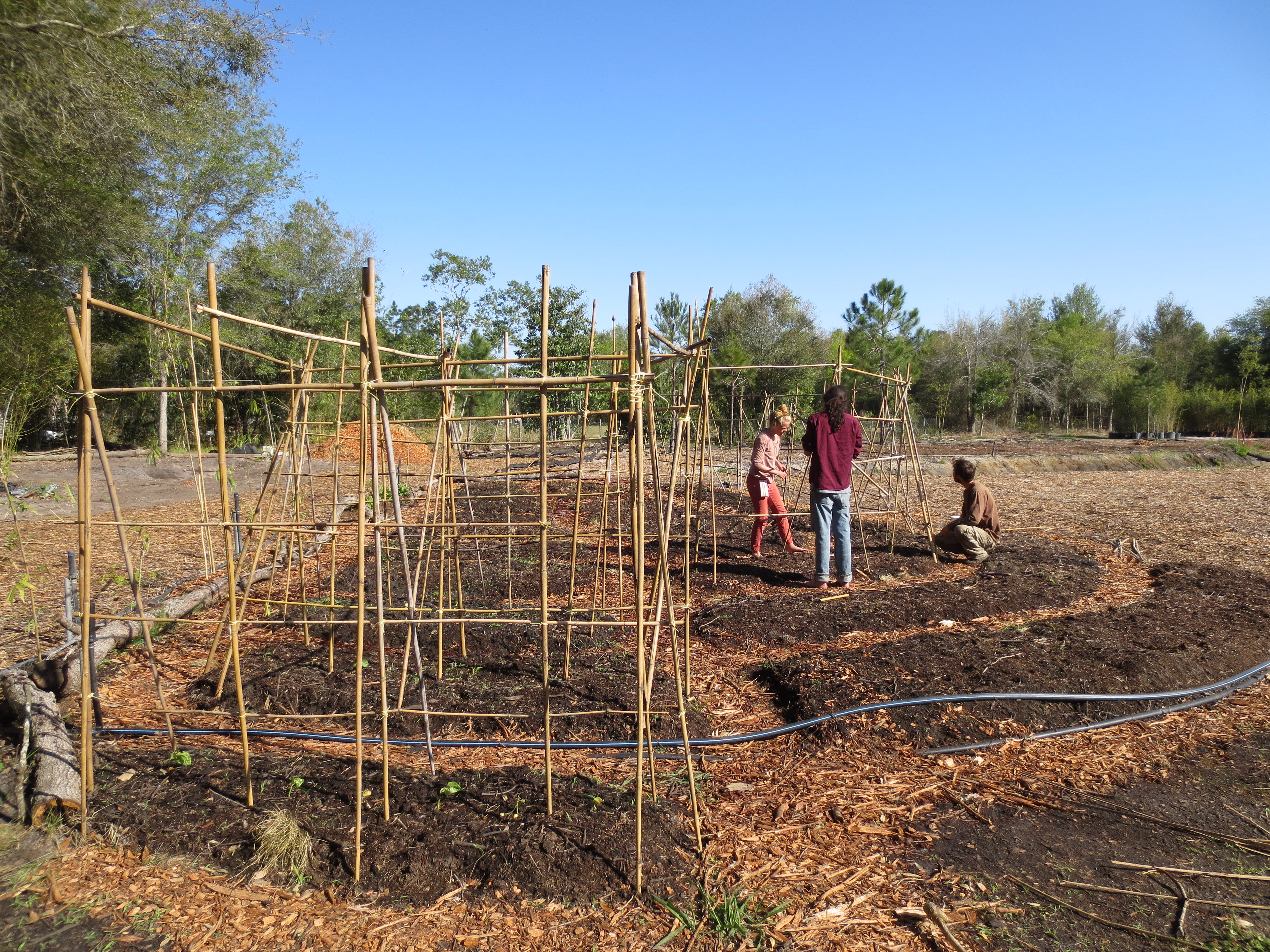 Tim (on right) with wwoofers Liane and Anthony building the bamboo trellising.